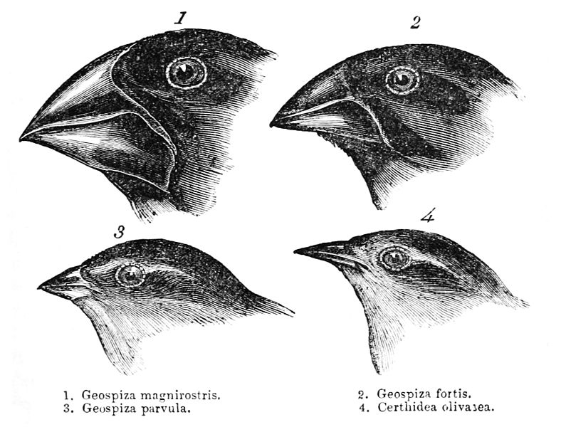 Evolutionen – ständigt i rörelse