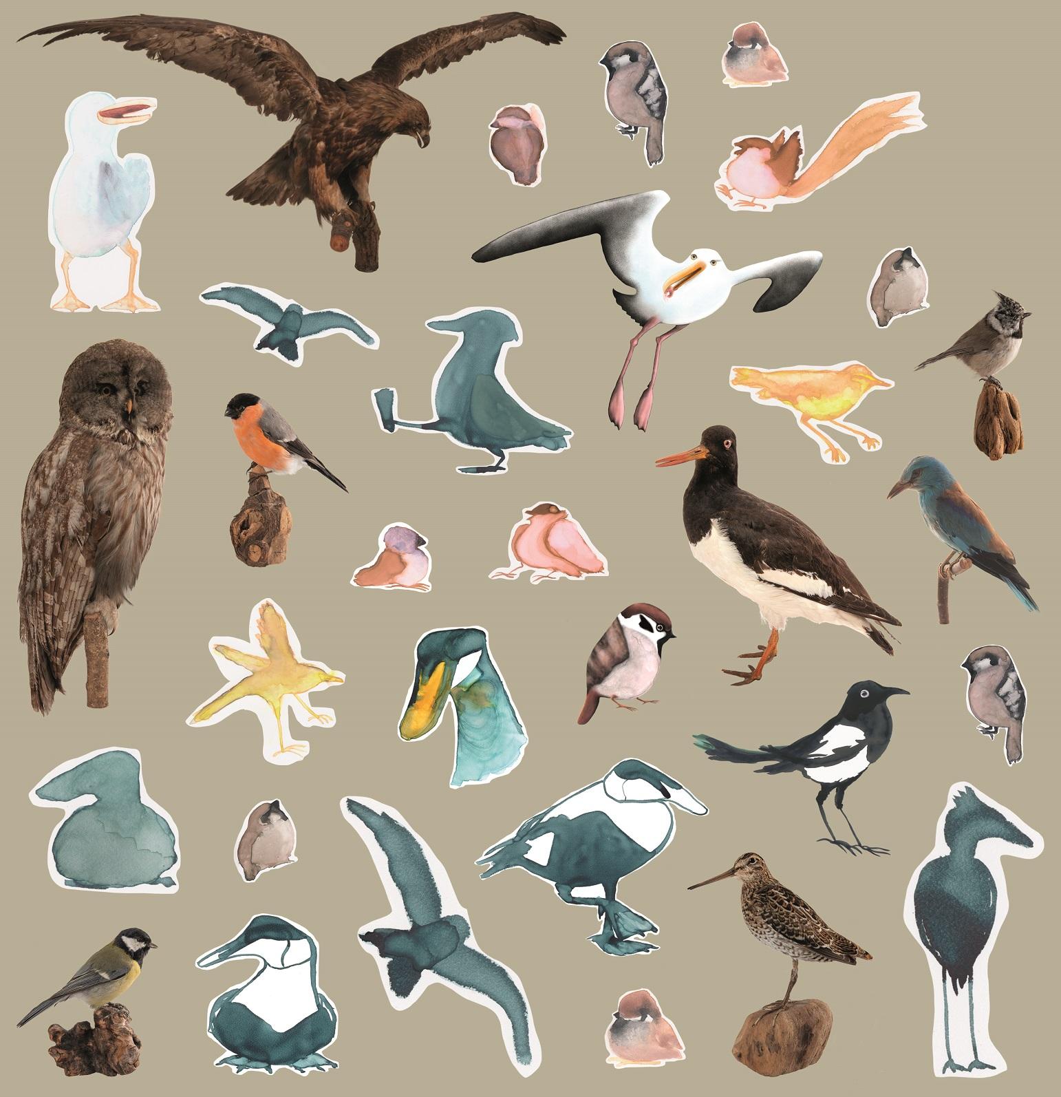 Vi fåglar