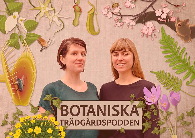 Växter som problemlösare