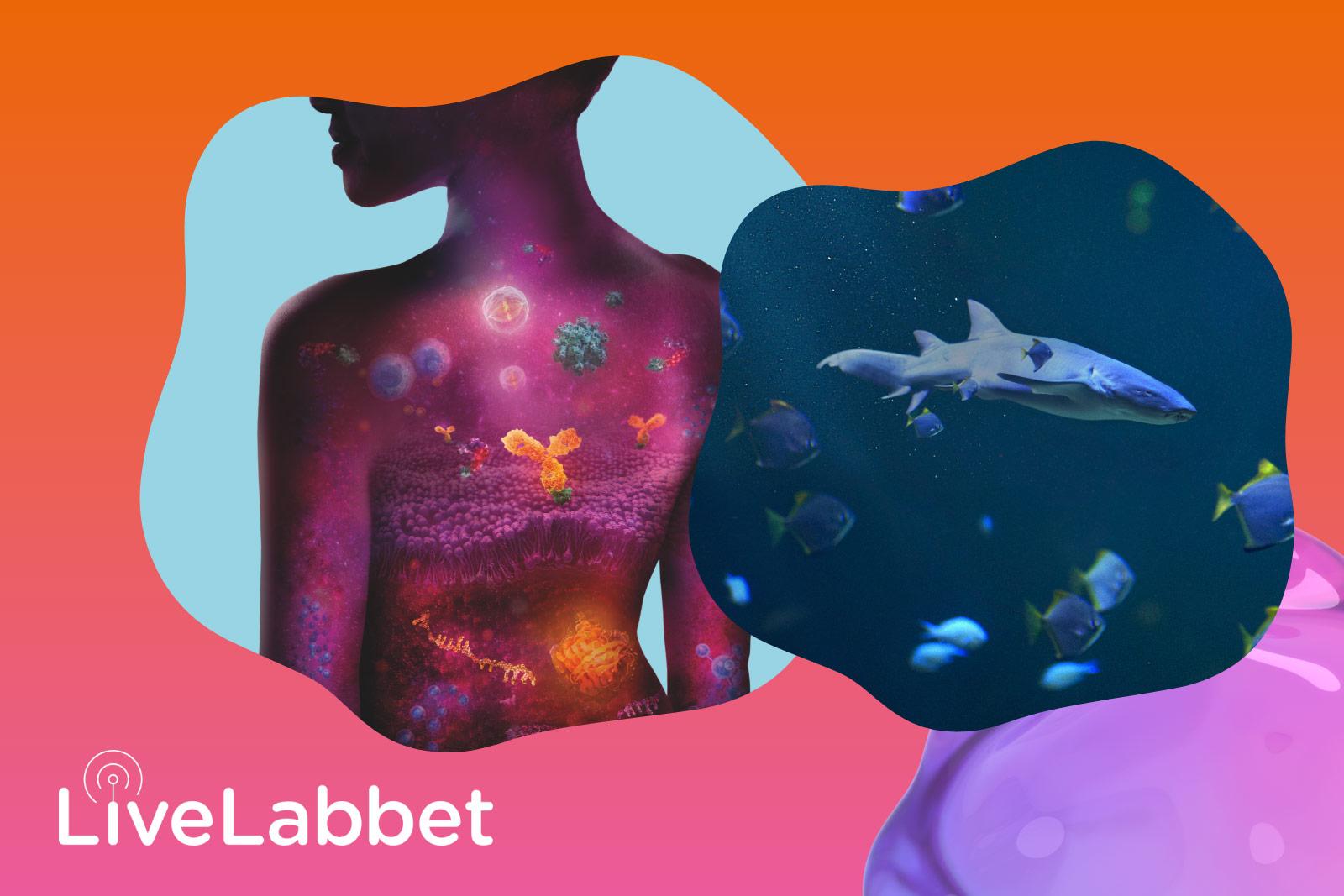 LiveLabb: Koll på koldi